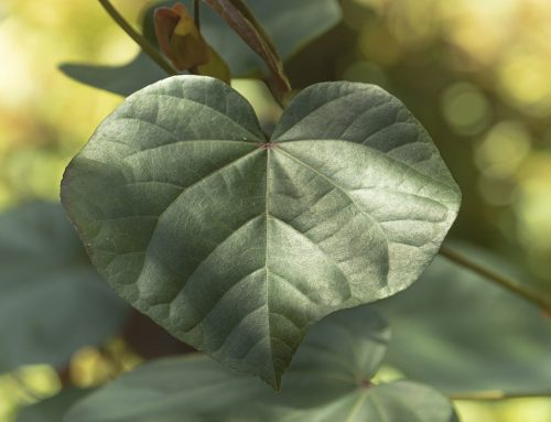 Realtime-Heart-Based – Profile-Lifestyle-Improvement programs